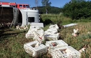 Hasiči zachraňovali na Krnovsku sedm hodin drůbež z polského kamionu