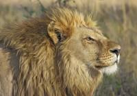 ZOO Dvůr Králové má jediné lví safari ve střední EvropěDosud nehodnoceno.