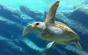 Pracovníkům Zoologické zahrady Liberec se podařilo odhalit a zatknout gang pytláků a pašeráků želv
