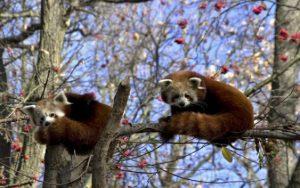 V Chomutově mají největší zoologickou zahradu v Čechách