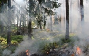Český hydrometeorologický ústav vydal výstrahu na zvýšené riziko požárů