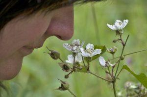 Pozor na ztrátu čichu