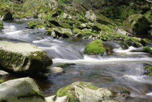 Průvodce tajemnem po Čechách – Rusalky, vodní démoni