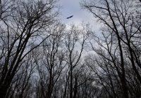 Průvodce tajemnem po Čechách – Lesy u Kostomlat obchází Temnota II.                                        5/5(2)