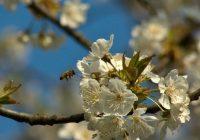 Nastávají Velikonoce, jeden z nejdůležitějších duchovních svátků roku, svátky jara a znovuzrození                                        5/5(1)