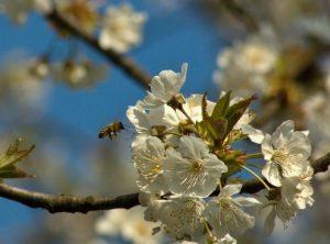 Nastávají Velikonoce, jeden z nejdůležitějších duchovních svátků roku, svátky jara a znovuzrození