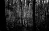 Hororová creepypasta na nedělní večer – Tajemství lesa