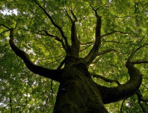 Koloběh roku – Letní Slunovrat je svátek života, plodnosti, ale i pokory a uvědomění si sama sebe