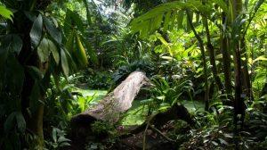 Tip na výlet – Botanická zahrada v Teplicích odhaluje rostlinné poklady