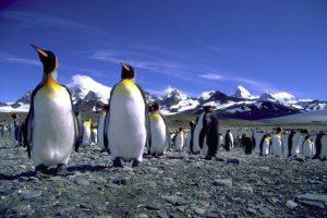Jižní Atlantik ukrývá druhé Galapágy, které jsou rájem pro baťůžkáře