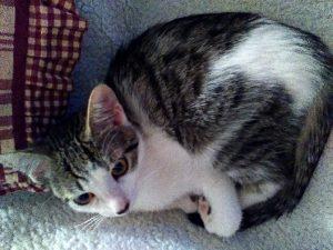 Jak se postarat o nalezené, či osiřelé malé kotě