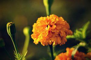 """""""Všechny květy jsou dokonalé"""", aneb o době covidové, a o tom co dělat abychom se nezbláznili s mystikem Jindřichem Kunešem"""