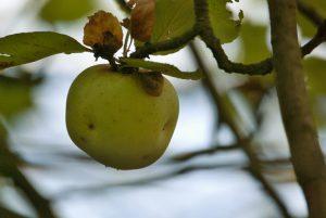 Koloběh roku – Mabon, podzimní rovnodennost je čas rozjímání a díků
